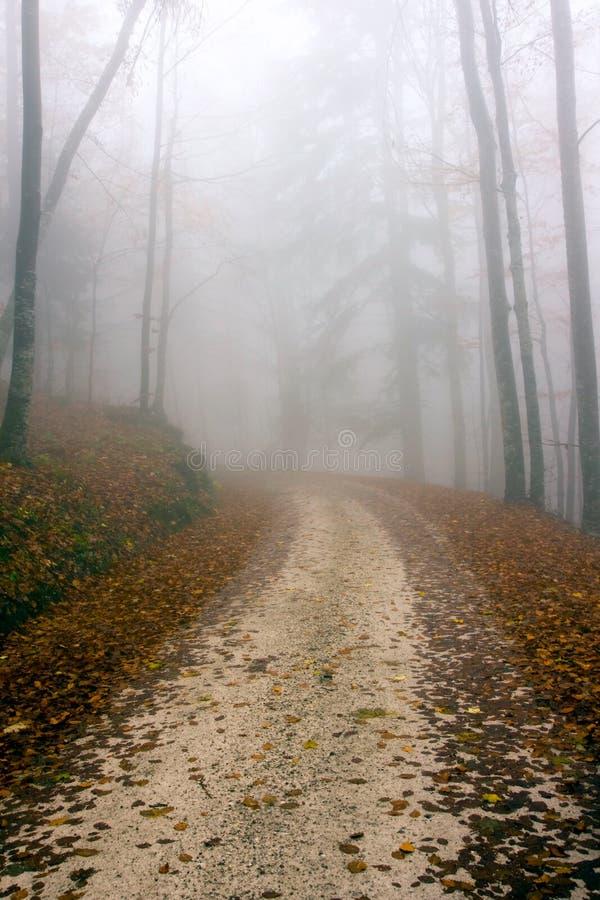 深森林公路 免版税图库摄影