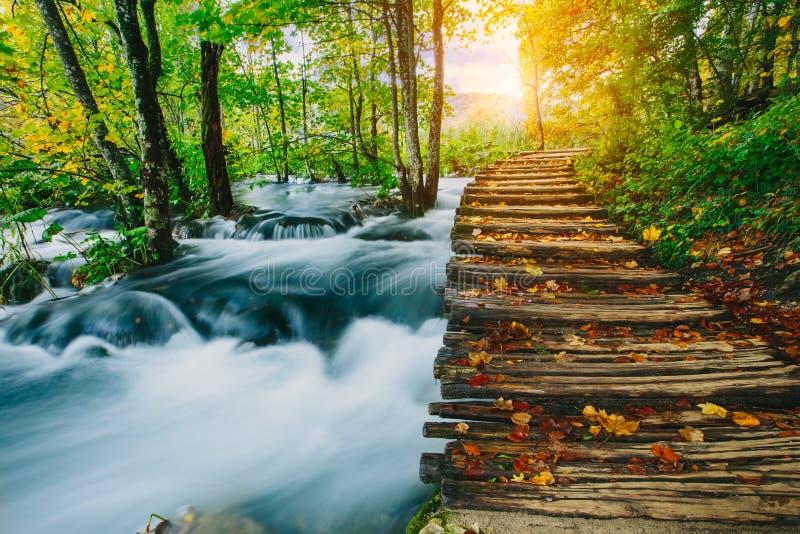 深森林小河用与木pahway的透明的水 Plitvice湖,克罗地亚联合国科教文组织 免版税图库摄影