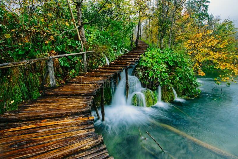 深森林小河用与路的透明的水 Plitvice湖 免版税库存图片