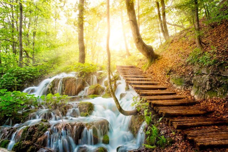 深森林小河用透明的水在阳光下 免版税库存照片