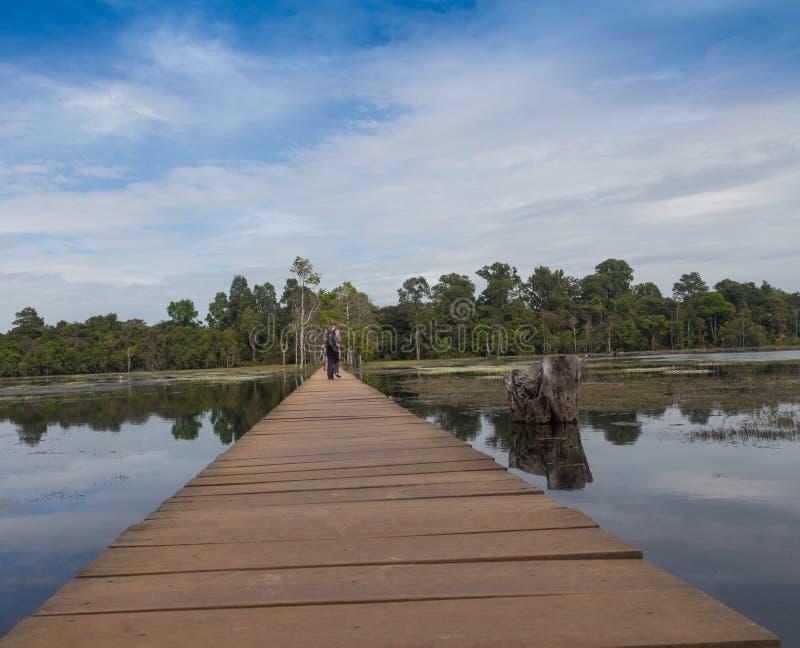 深森林小河用透明的水在阳光下 库存照片