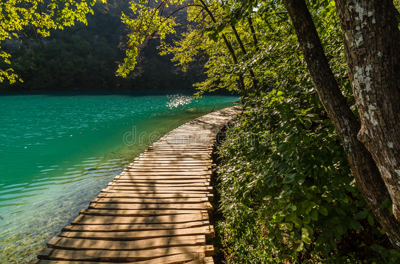 深森林小河道路用透明的水在阳光下 克罗地亚湖plitvice 免版税库存照片
