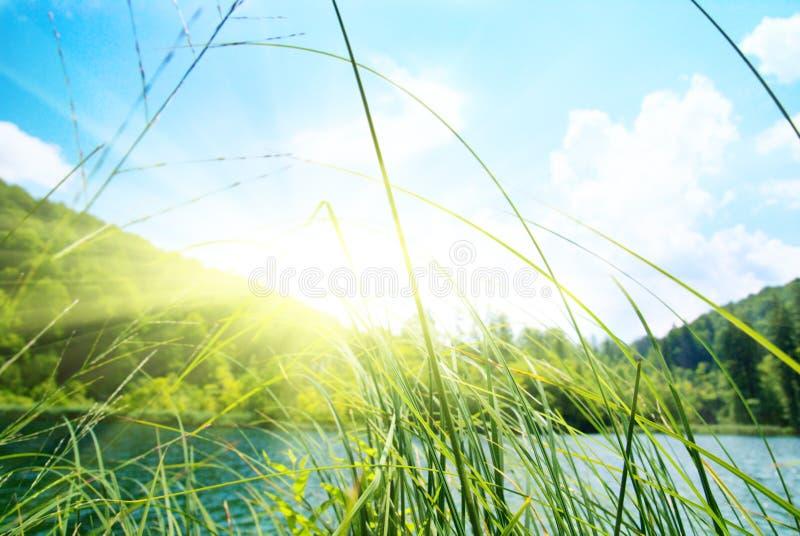 深森林湖 图库摄影