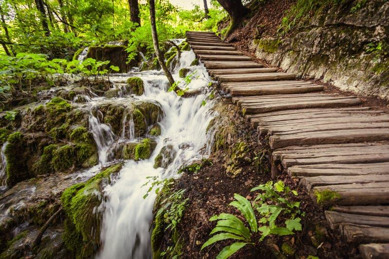 深森林用清楚的水 Plitvice,克罗地亚 库存照片