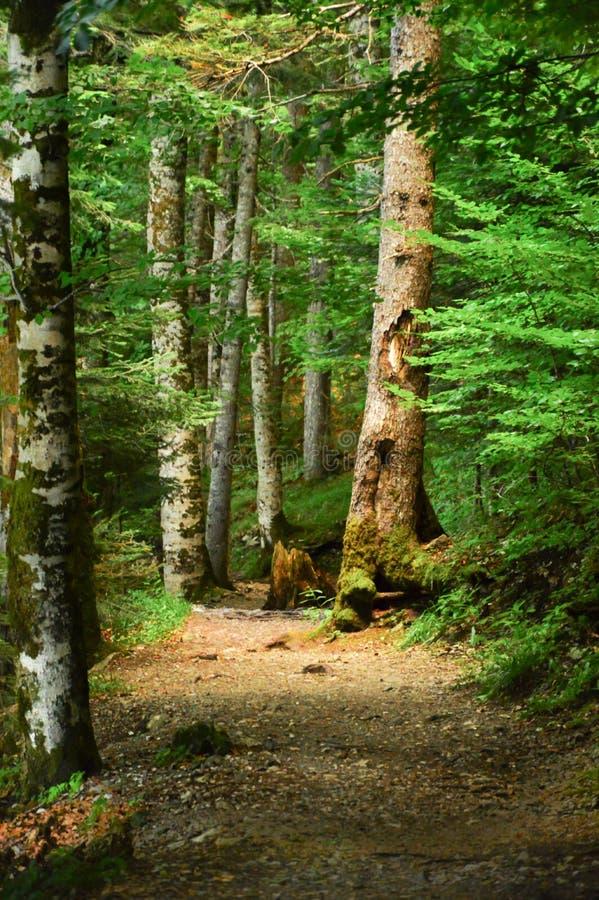 深森林路径 免版税库存照片
