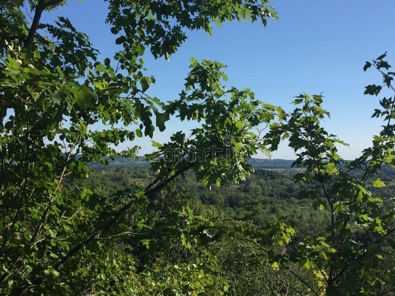 从深森林里边的惊人的看法 免版税库存照片