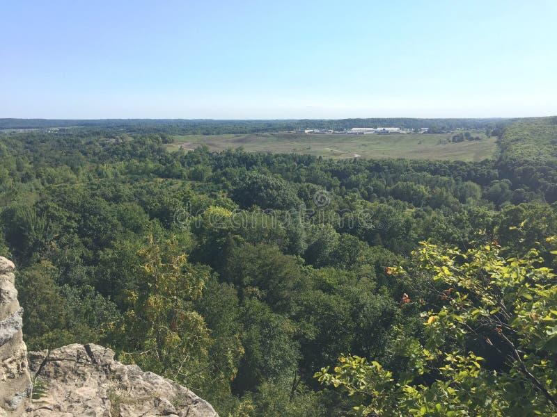 从深森林里边的惊人的看法 库存图片