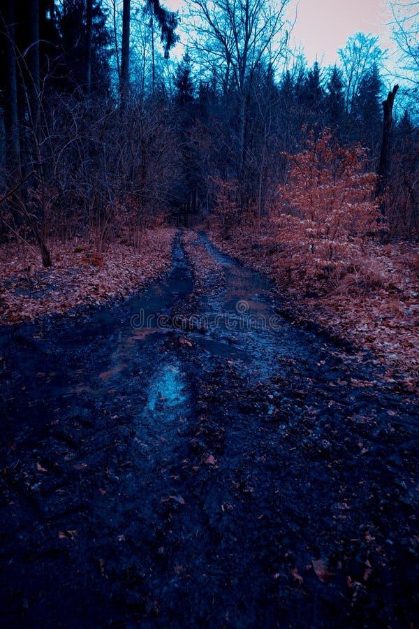 深深土方式到森林里 库存图片