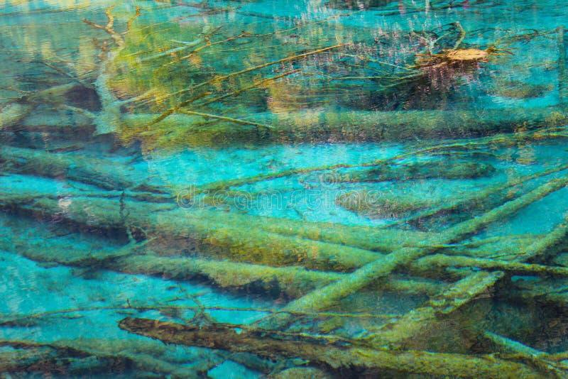 深深在有死的树的湖 免版税库存图片