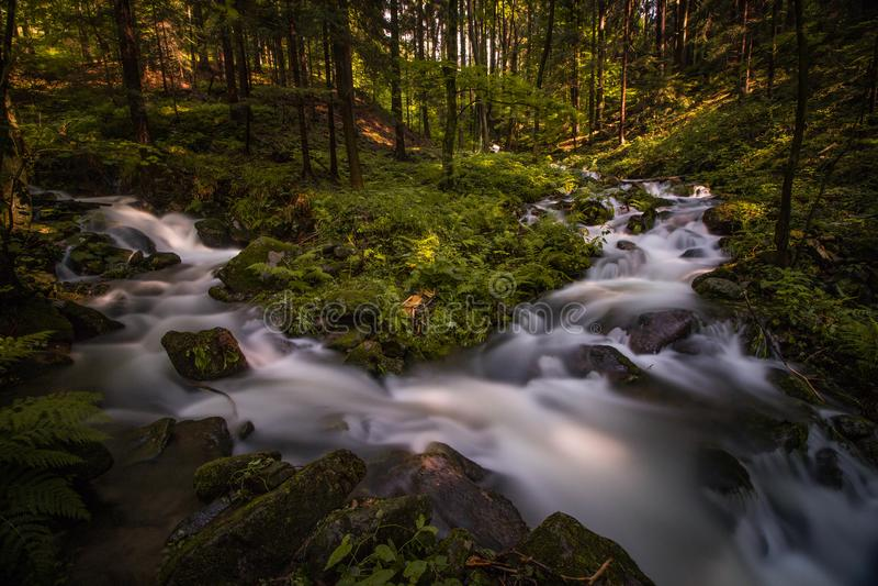 深深小河在夏天森林里 库存图片