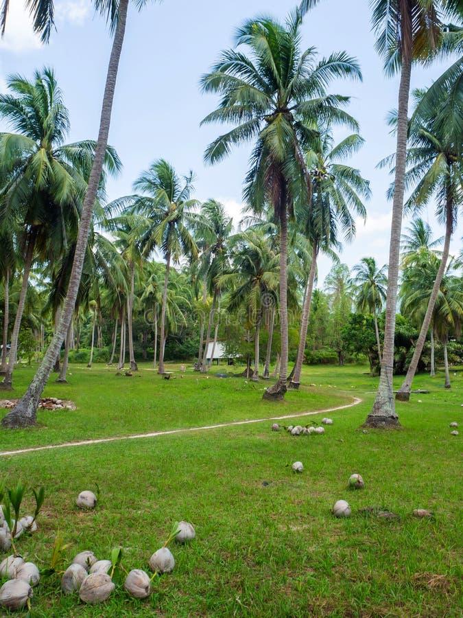 深深议院在棕榈树丛里 图库摄影