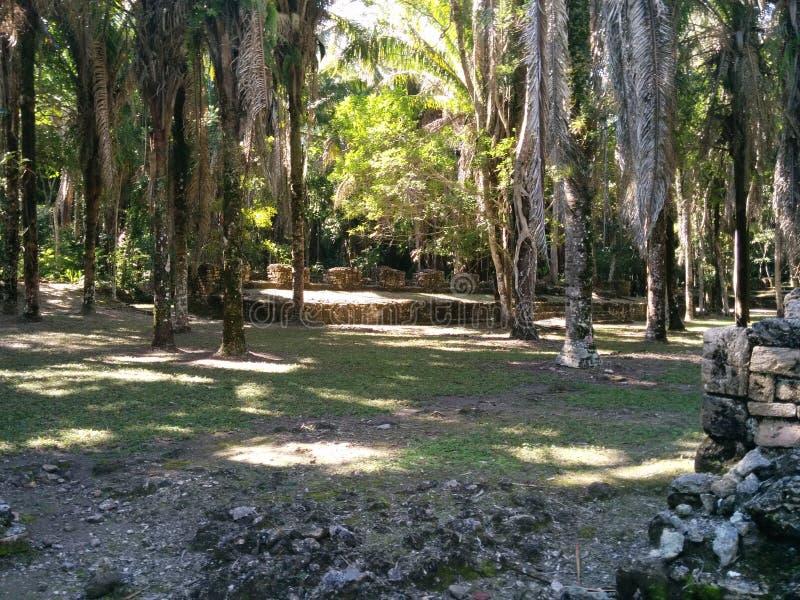 深深Kohunlich玛雅废墟在密林 免版税库存图片
