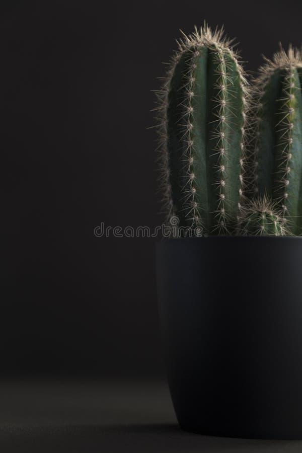 深灰罐用反对黑背景的仙人掌 免版税库存图片
