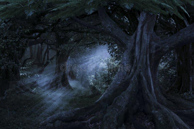 深热带密林在黑暗中 免版税库存照片
