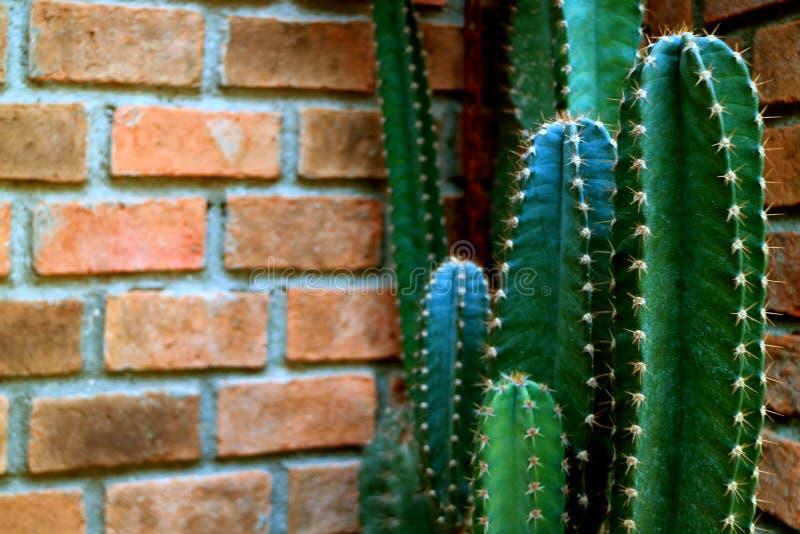 深绿仙人掌对赤土陶器砖墙 免版税图库摄影