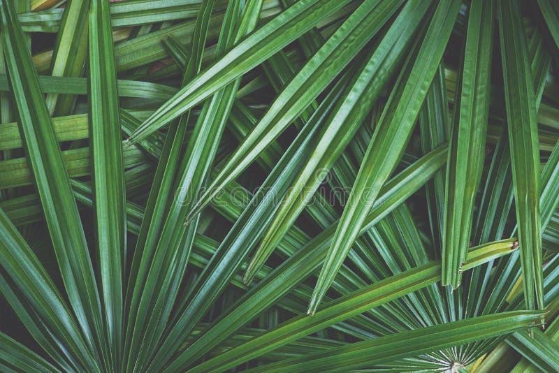 深绿叶子纹理背景,热带密林口气概念 图库摄影