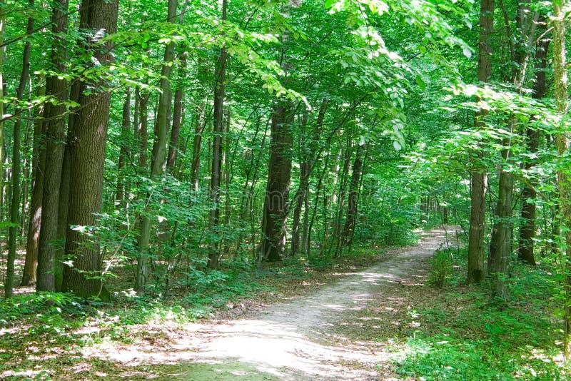 深绿色路径 库存照片