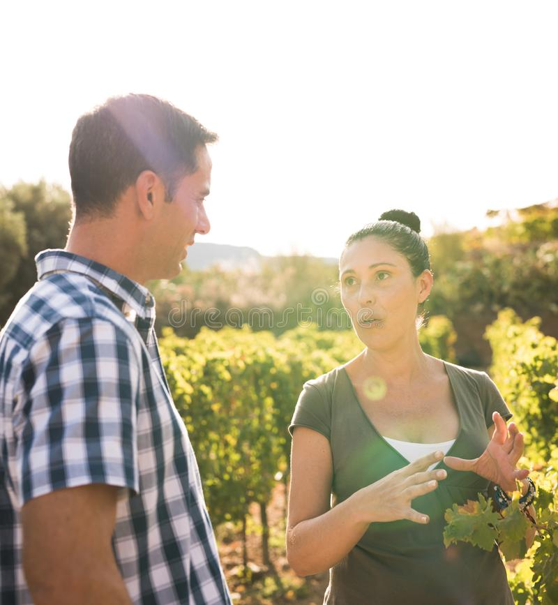 深色和英俊的人谈话在葡萄园里 免版税库存照片