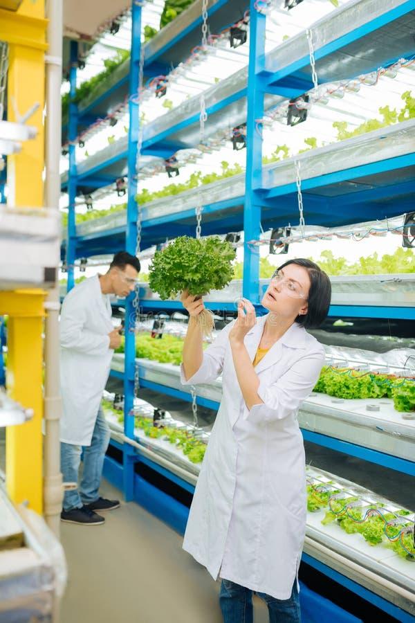 深色头发的女性拿着莴苣的农业学家佩带的白色外套 免版税库存图片