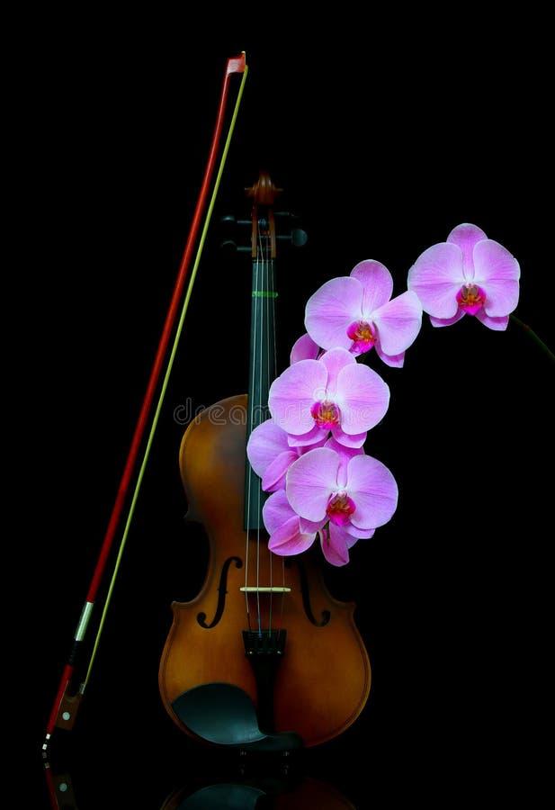 深色背景中带蝴蝶结和蝴蝶兰粉色兰花的复古小提琴 库存图片