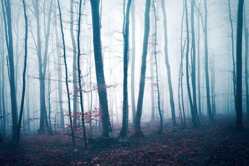 深蓝红色色的有雾的林木风景 免版税图库摄影