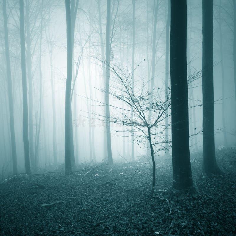 深蓝色的有雾的林木风景 免版税库存图片