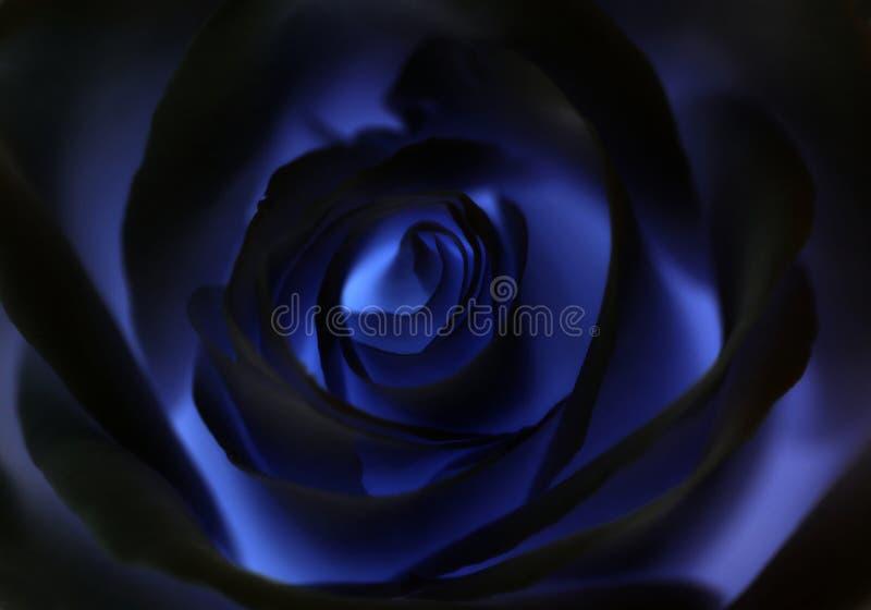 深蓝cretive玫瑰色花背景,宏指令 免版税图库摄影