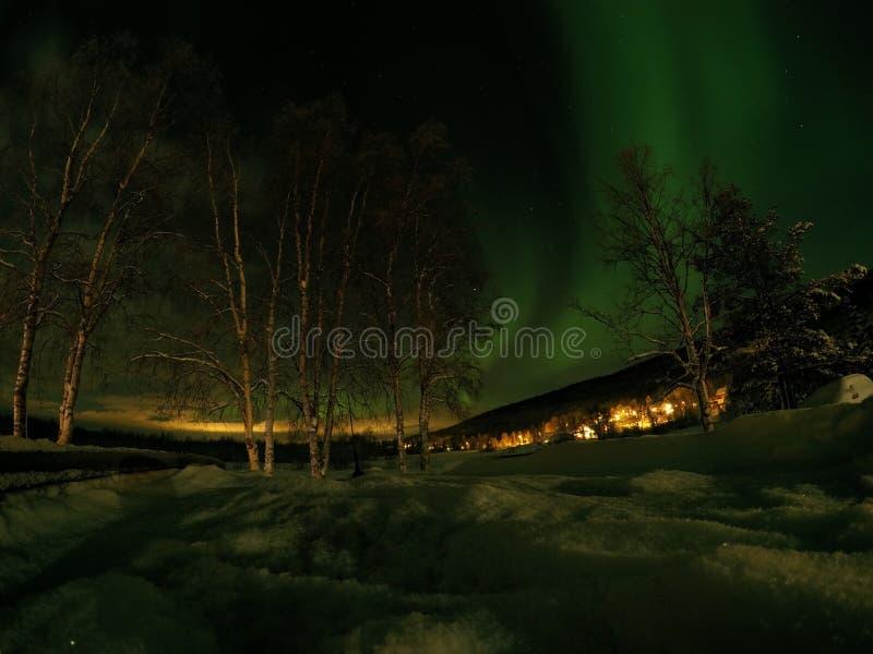 深雪和高树与极光borealis 免版税库存照片