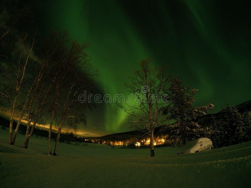 深雪和高树与极光borealis 图库摄影