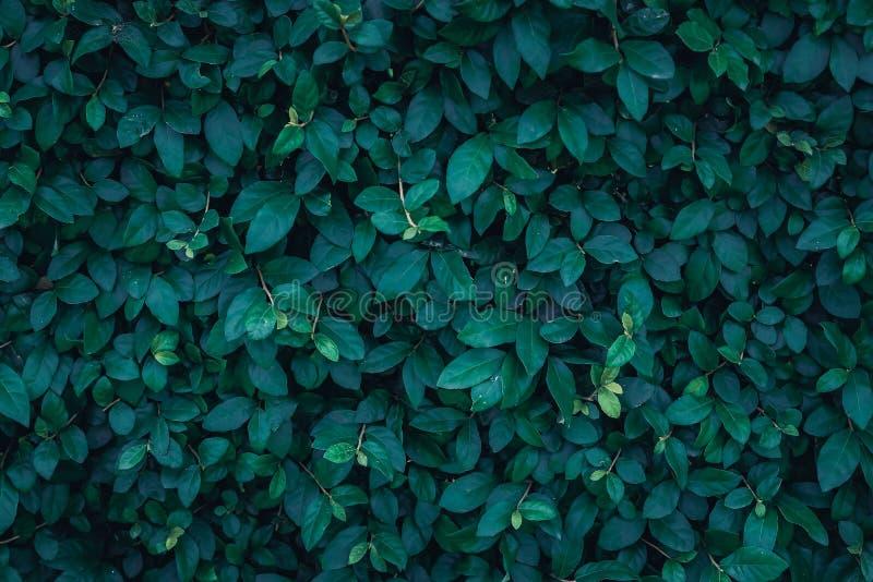深绿叶子纹理 免版税图库摄影
