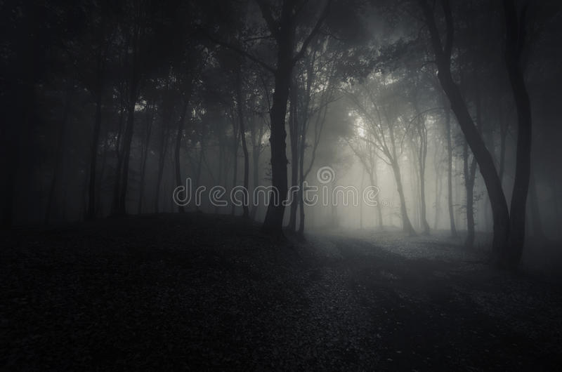 深黑暗的森林在万圣夜夜 免版税图库摄影