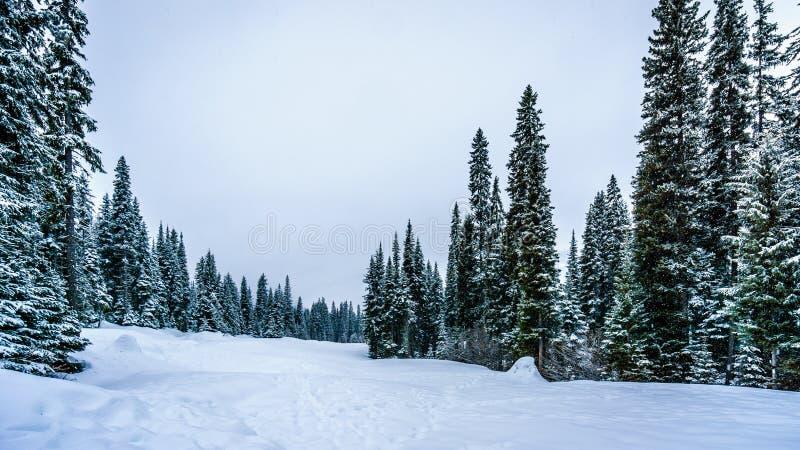 深刻的雪组装在森林里 免版税库存图片