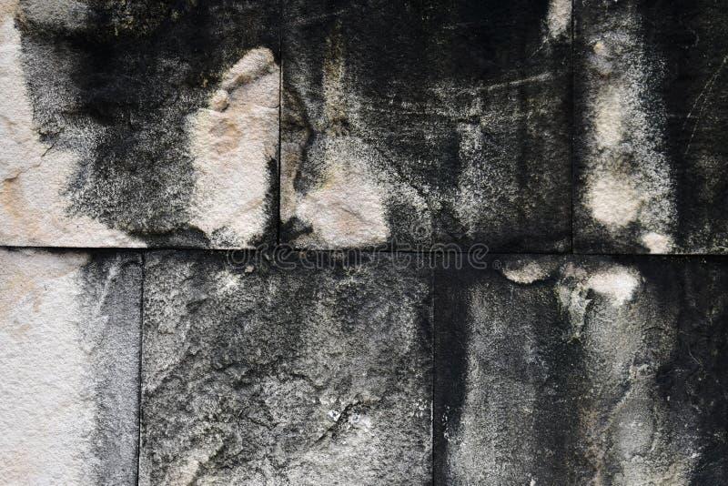 混凝土墙纹理有干燥地衣污点的  免版税图库摄影