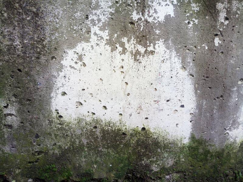 混凝土板纹理在绿色青苔和模子,背景的 免版税库存图片