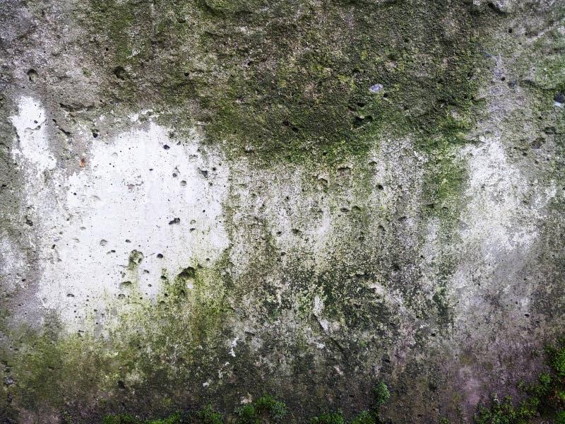 混凝土板纹理在绿色青苔和模子,背景的 库存图片