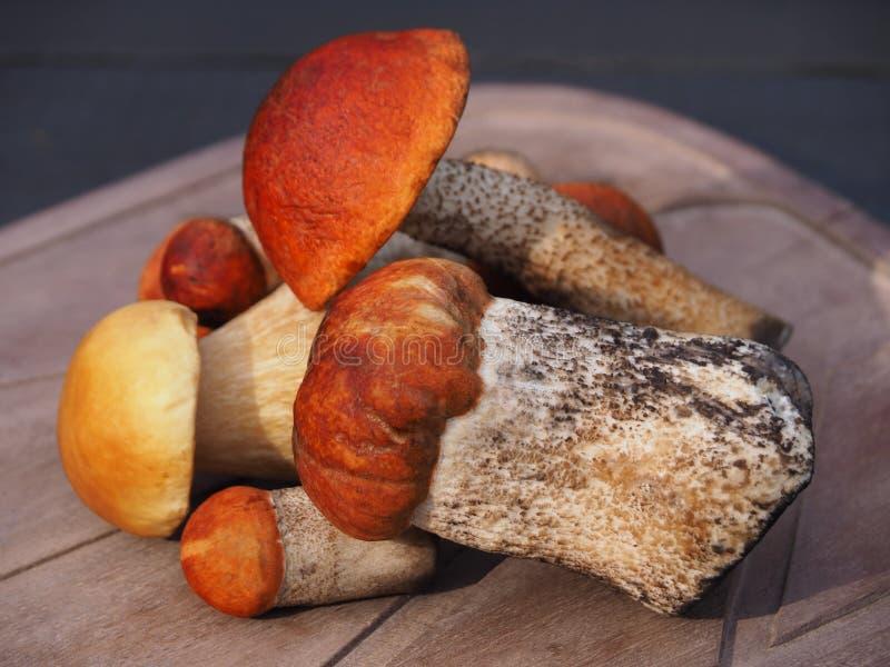 混合可食的蘑菇 免版税库存照片