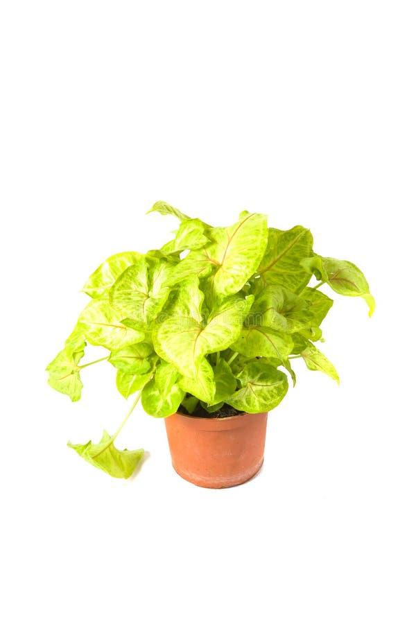 混合室内植物 库存照片