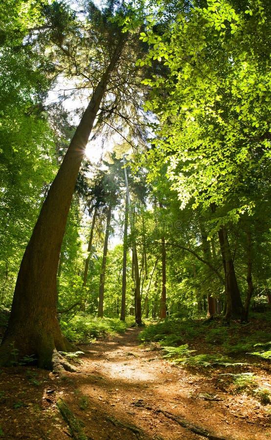 混合的森林 免版税库存照片