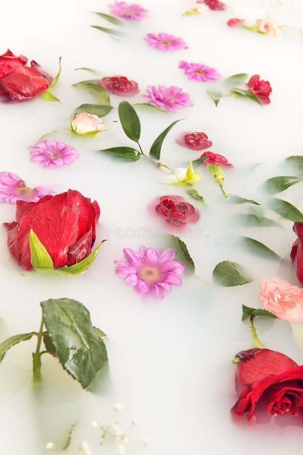 混合花瓣和叶子在牛奶浴、背景或者纹理按摩和温泉的,放松 库存照片