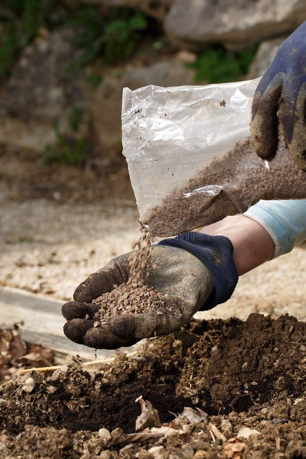 混和有机肥料腐殖粒子的花匠与土壤,丰富土壤 免版税库存图片