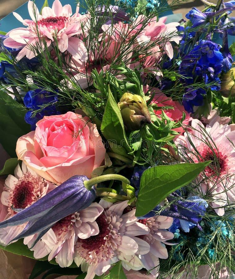 混杂的五颜六色的花春天花束  花花束包括桃红色菊花,美丽的蓝色翠雀,桃红色玫瑰 免版税库存图片