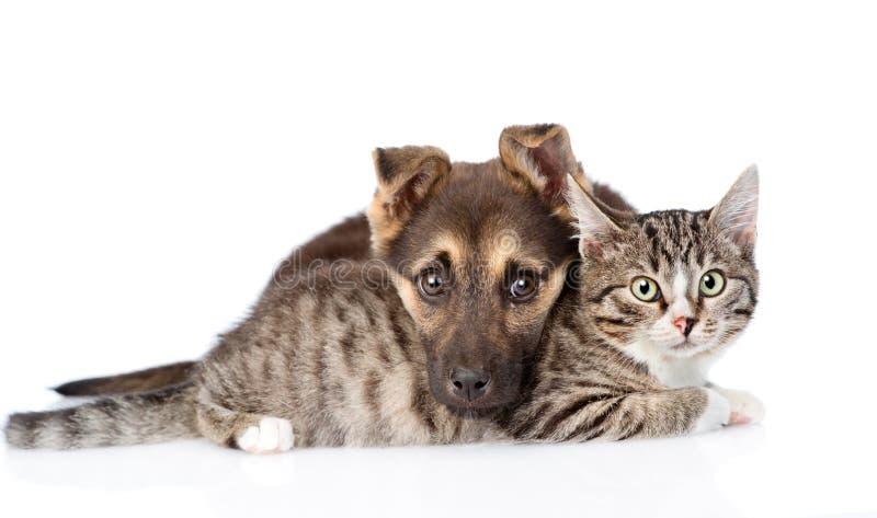 混杂的品种狗拥抱虎斑猫 背景查出的白色 免版税库存图片