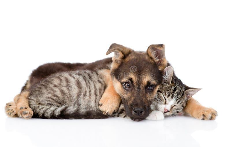 混杂的品种狗拥抱虎斑猫 背景查出的白色 免版税库存照片