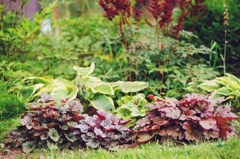 混杂的多年生植物组合在夏天庭院里 图库摄影