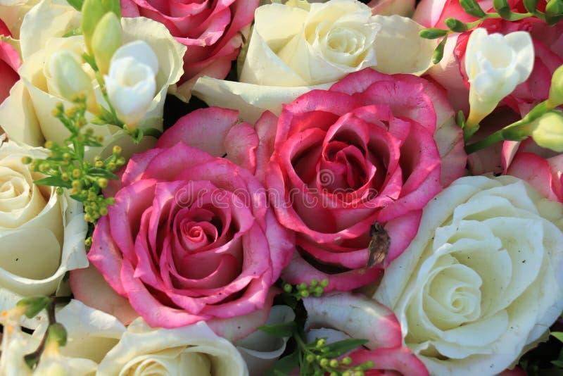 混杂的桃红色和白玫瑰 图库摄影