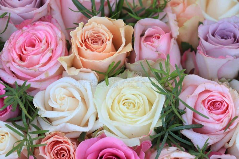 混杂的桃红色玫瑰 图库摄影