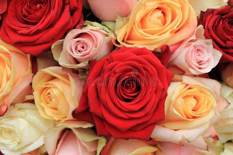 混杂的桃红色玫瑰 库存照片