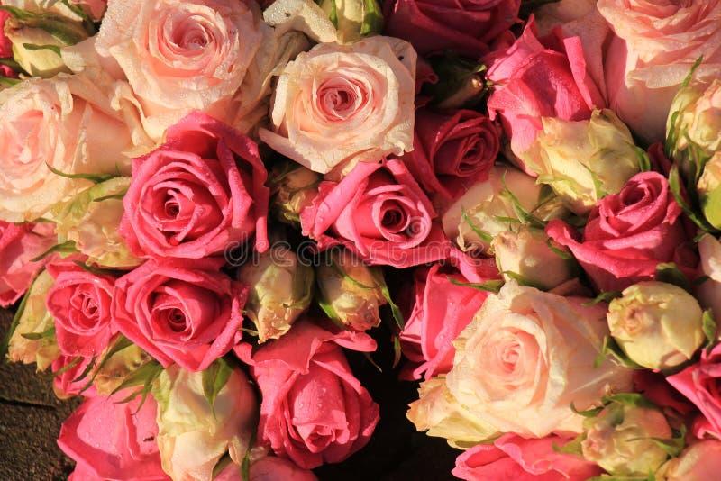 混杂的桃红色玫瑰 库存图片