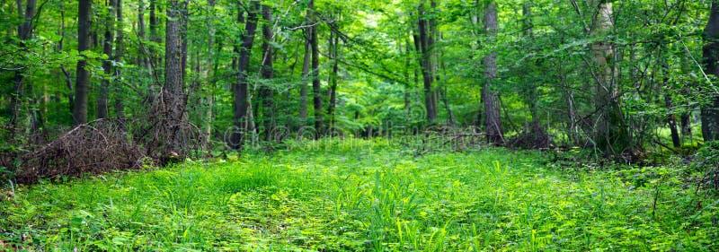 混杂的森林 免版税库存图片