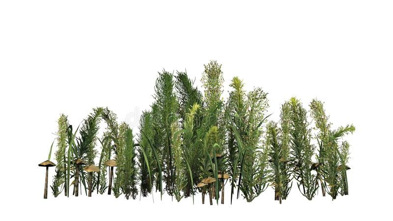 混杂的绿色-不同的绿色植物和褐色蘑菇 皇族释放例证